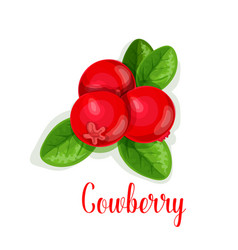 Cowberry berry isolated icon vector