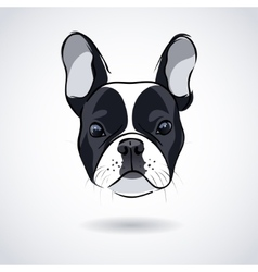 French bulldog head isolated on white background vector