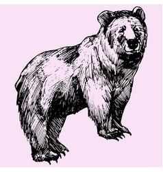 Big bear vector