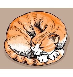 Sleeping red cat vector