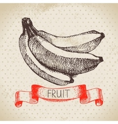 Hand drawn sketch fruit banana eco food vector