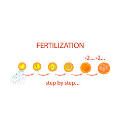 fertilization vector image