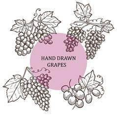 hand drawn grapes vector image vector image