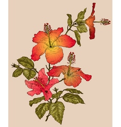 Hibiscus flower sketch vector