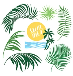 Tropic collection tropical leaves set vector
