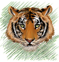 The tiger sketch vector image