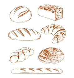 Collection of breads vector
