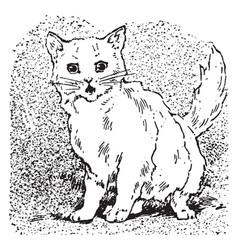 Cat meows vintage vector
