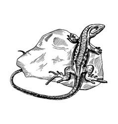 Lizard on stone engraving vector
