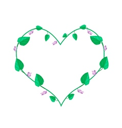 Centrosema Pubescens Plants in A Heart Shape vector image