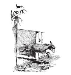 Donkey running away vintage vector