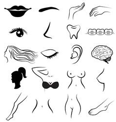 Women body parts human vector image vector image