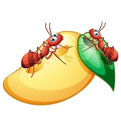 A mango with ants vector image vector image