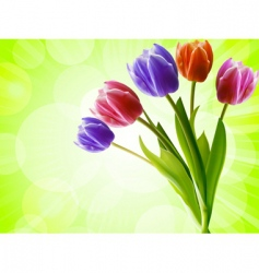 tulips on a green background vector image vector image