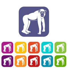 Chimpanzee icons set flat vector