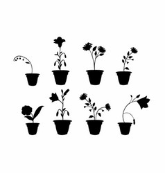 Shadows flower pots vector