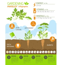 Gardening work farming infographic parsley graphic vector