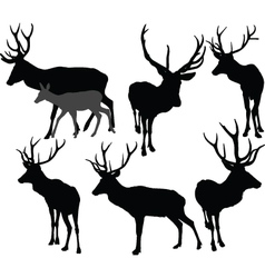 deer collection 2 - vector image vector image