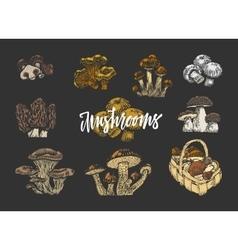 Colored Mushroom Elements Set vector image
