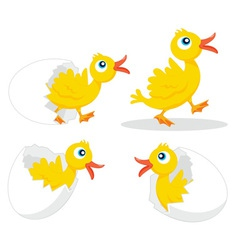 Four chicks vector image