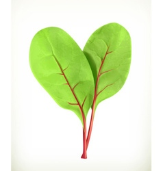 Baby beetroot leaves vector image vector image
