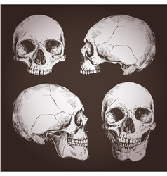 Drawing Of Human Skulls From Different Angles vector image vector image