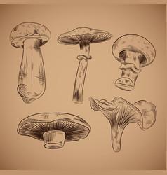 mushroom hand drawn vector image vector image