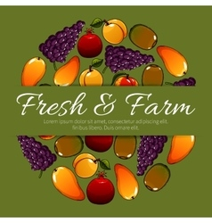 Fruit poster of fresh farm fruits harvest vector