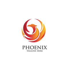 best phoenix logo vector image