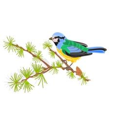 Titmouse bird on branch larch vector