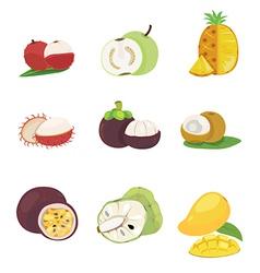 Tropical fruit vector