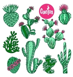 Color cactus set vector