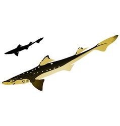 piked dogfish vector image