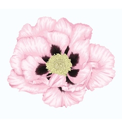 Tree peony white flower isolated on white vector