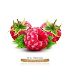 Three berry raspberry with green leaves isolated o vector