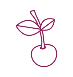 Contour purple line with cherry fruit vector