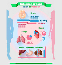 human internal organs infographic template vector image