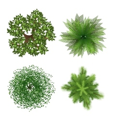Top view trees vector image