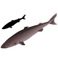 Greenland shark vector image