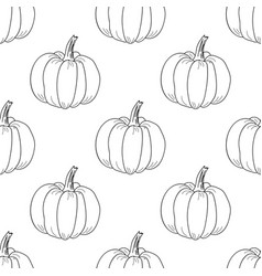 pumpkin pattern contour graphic on white vector image