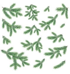 Branches of a christmas tree vector