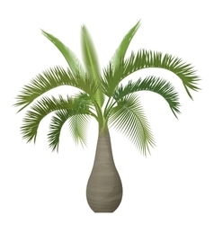 Tropical exotic palm tree isolated vector