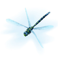 Sad dragonfly vector