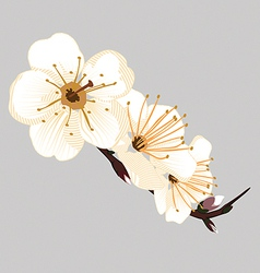 Orchid flower on a gray background vector