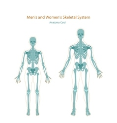 Anatomy guide male and female skeleton front vector