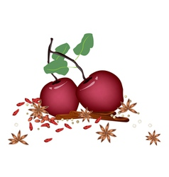 Christmas Apples and Spices on White Background vector image