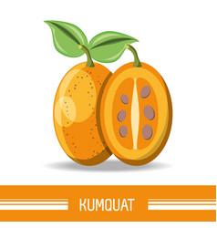 Citric fruits design vector