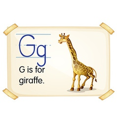 Letter g vector