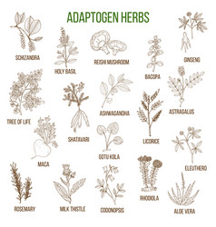 Adaptogen herbs hand drawn set of medicinal vector
