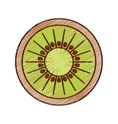 Kiwi fresh fruit isolated icon vector